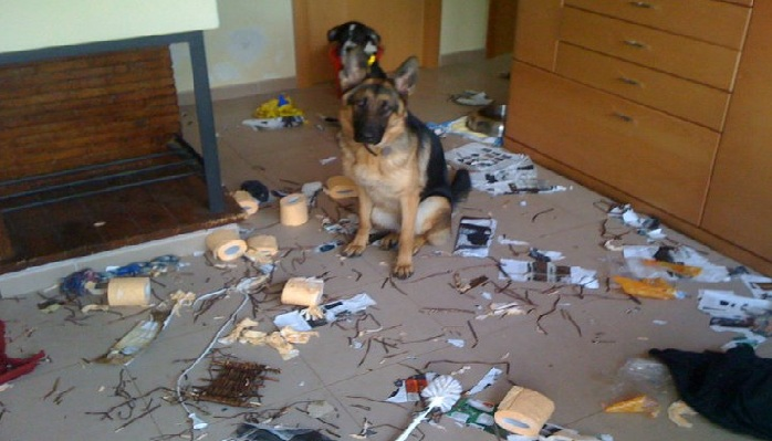 Perros trastadas #1