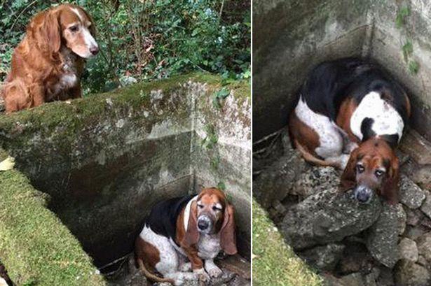 Tillie y Phoene, los dos perros protagonistas en Vashon (Washington, EE.UU)