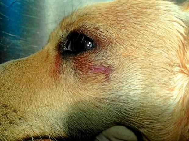 Fotografía del cadáver de la perra Tula