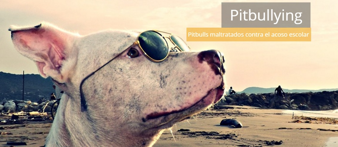 Pitbullying - Conectadogs